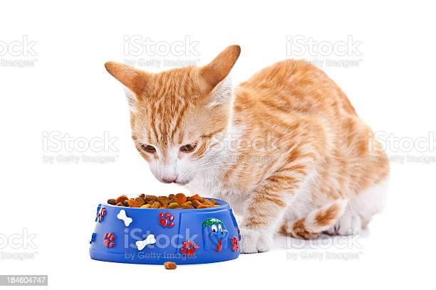 Cat eating picture id184604747?b=1&k=6&m=184604747&s=612x612&h=wqpk88fhvfp4mv3if8gac8mdaf5cemjyurfqam4ebtw=