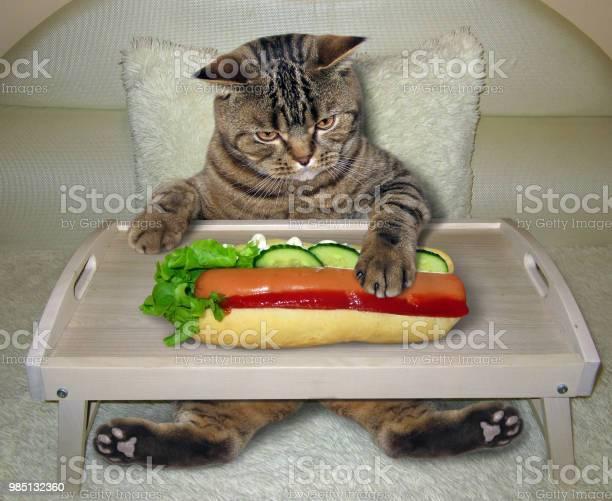 Cat eats a hot dog on the bed picture id985132360?b=1&k=6&m=985132360&s=612x612&h=atugnupr8ogrbcn3wa ye o9ffqeobgudfglr27wzcy=