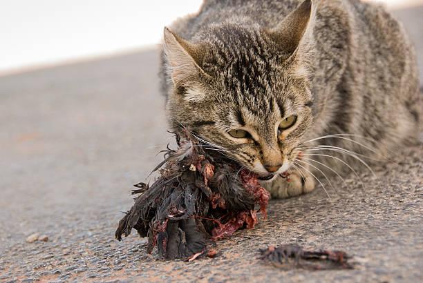 Cat Eats Bird stock photo