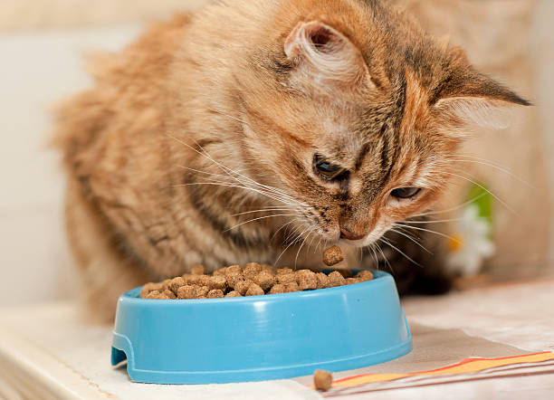 Cat eats dry catfood stock photo