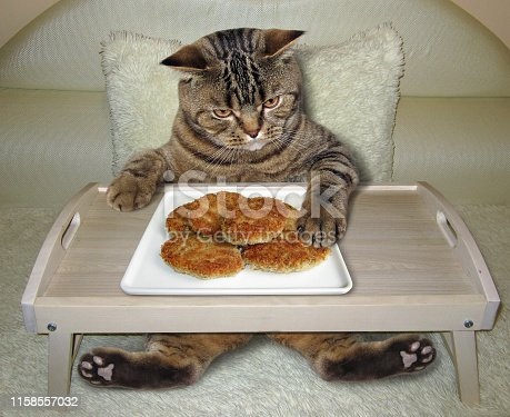 539672394 istock photo Cat eats fried cutlets from a bed tray 1158557032