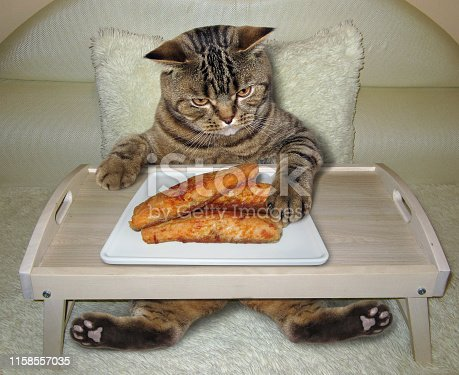 istock Cat eats fried fish from a bed tray 1158557035