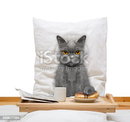 istock cat eats in bed and drink 539672394