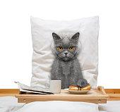 猫のベッドでのお食事とドリンク