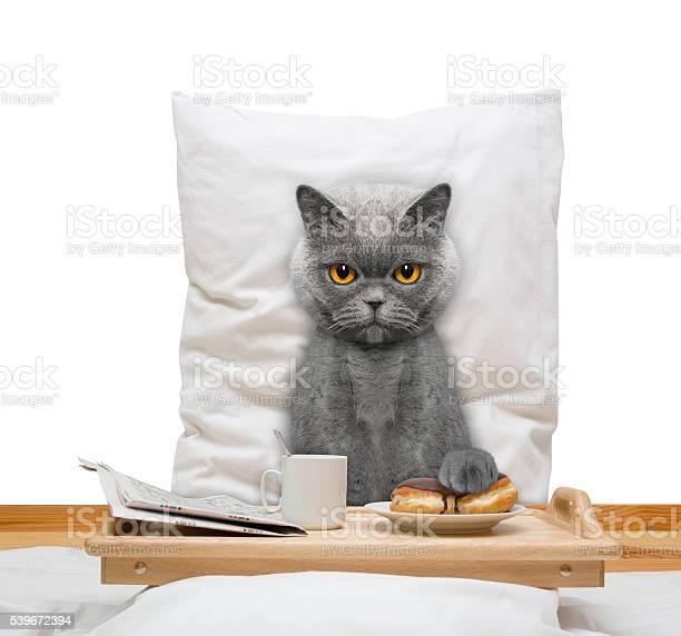 Cat eats in bed and drink picture id539672394?b=1&k=6&m=539672394&s=612x612&h=xoq 4ufbvza3rgaedujgc3p3ecvnadokwi3okj0rmae=