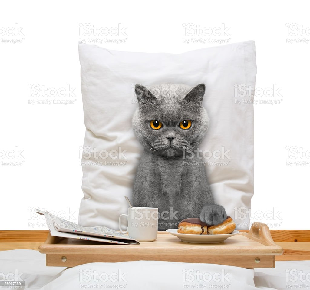cat eats in bed and drink stock photo
