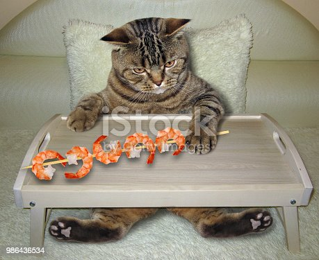 539672394 istock photo Cat eats shrimp on the bed 986436534