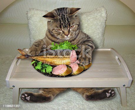 istock Cat eats stuffed fish from a bed tray 1158631351