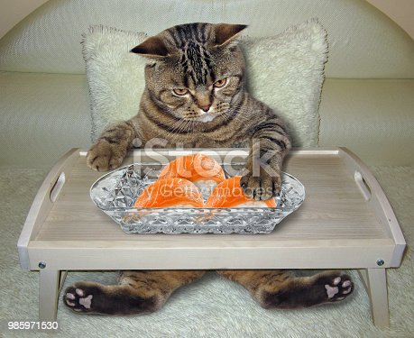 539672394 istock photo Cat eats sushi on the bed 985971530