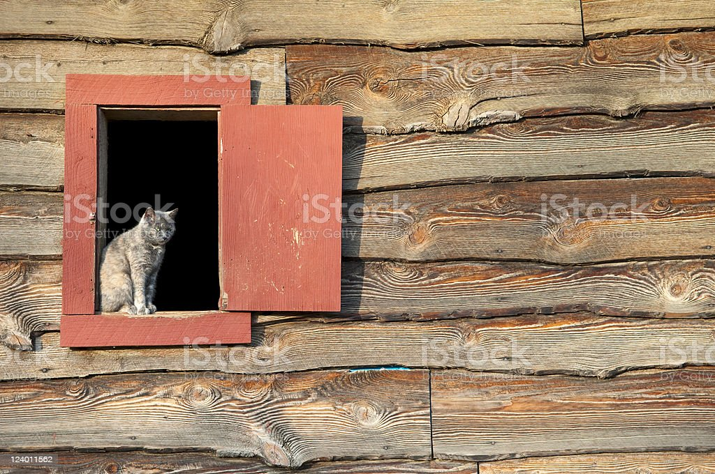 Cat in barn window stock photo