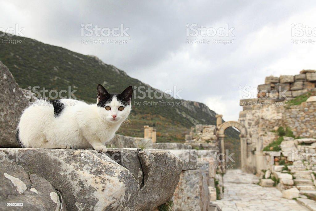 Cat & Ephesus royalty-free stock photo