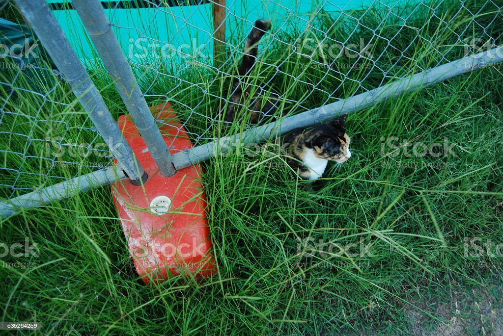 Cat escaping under a fence stock photo