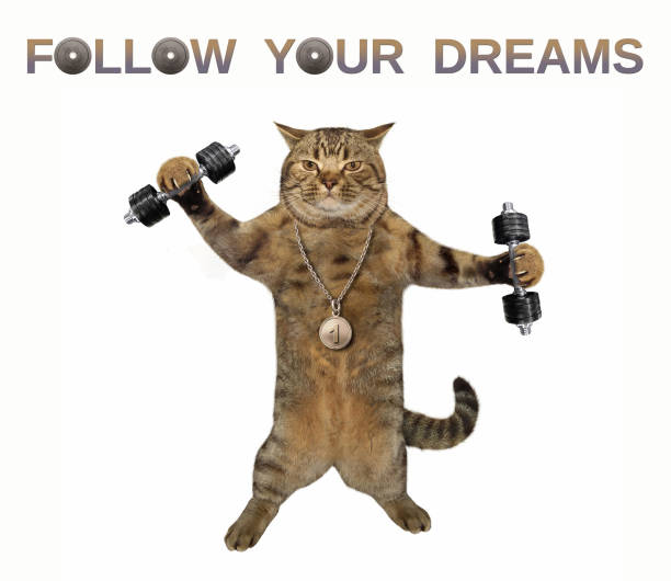 Cat exercises with dumbbells stock photo