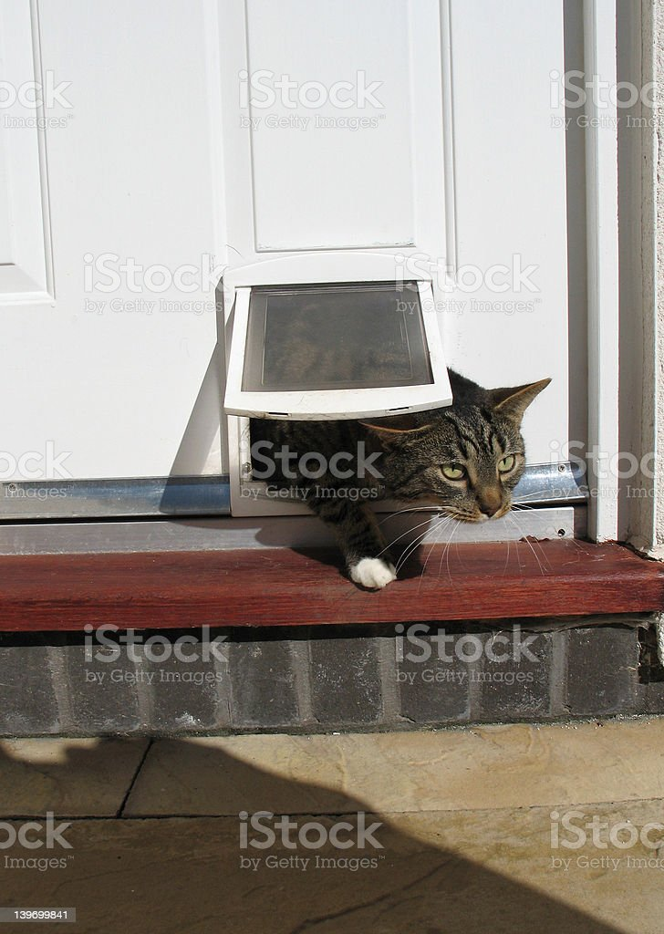Cat exiting through flap royalty-free stock photo