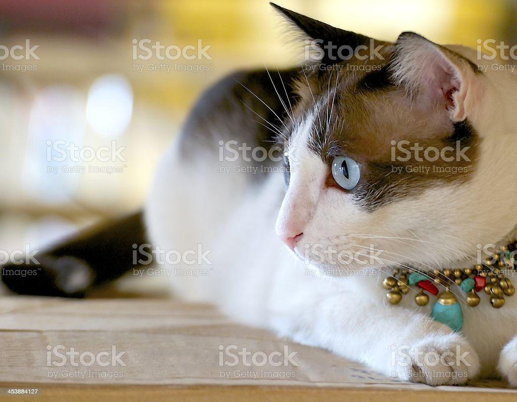 Cat eye royalty-free stock photo