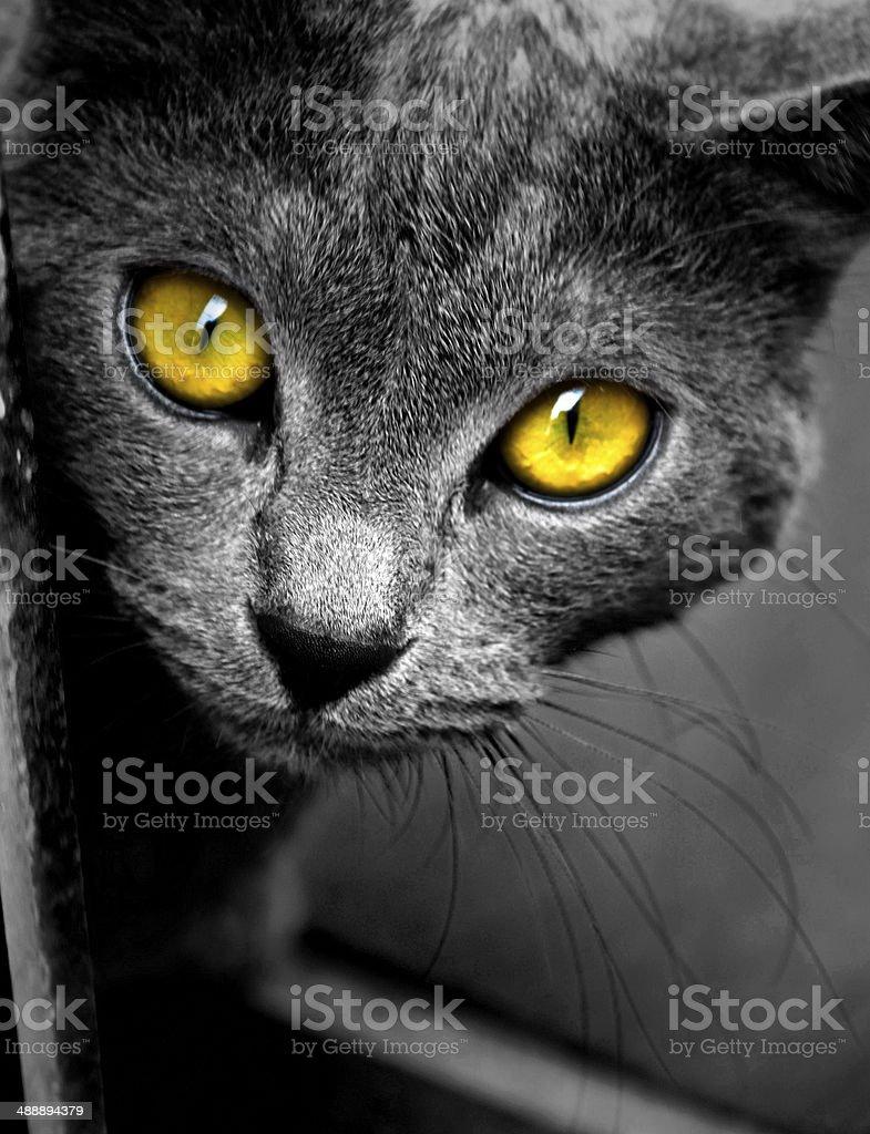 Cat eyes close-up stock photo