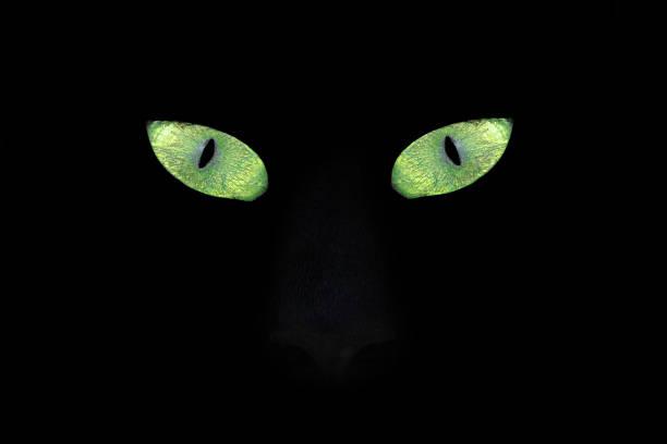 Cat eyes in the Dark stock photo