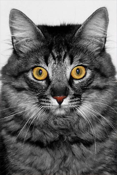 Katze Augen – Foto