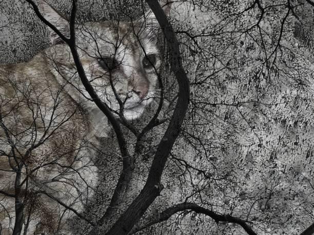Cat face and dead trees picture id900440396?b=1&k=6&m=900440396&s=612x612&w=0&h= sh4muyprvbtrt70866fltsskrs5yqey5bqnwcfa28m=