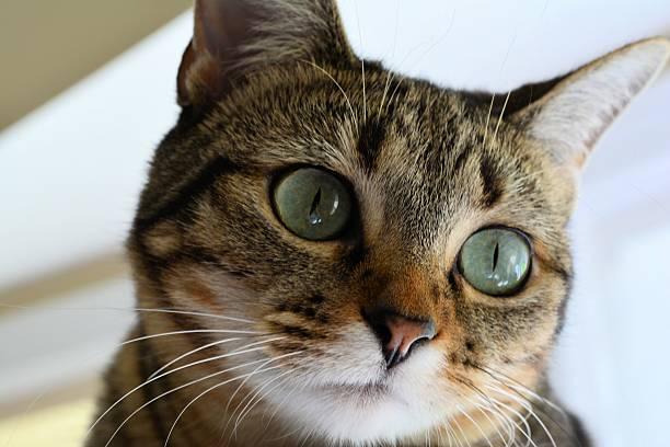 Cat Face Close up stock photo