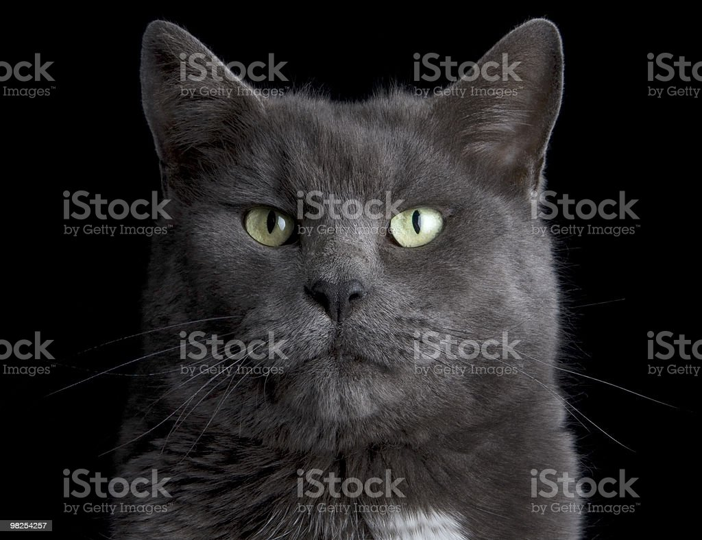 Cat Face royalty-free stock photo
