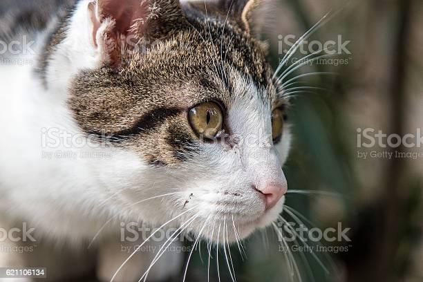 Cat face side view picture id621106134?b=1&k=6&m=621106134&s=612x612&h=tf1 df fpw dbfumor50sxspv fcekr50uzdp c2ete=