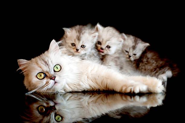 Cat family picture id108273929?b=1&k=6&m=108273929&s=612x612&w=0&h=rg vpb8dod5xf2o5ban1k257oqmj1klf3rzju6g6 fa=