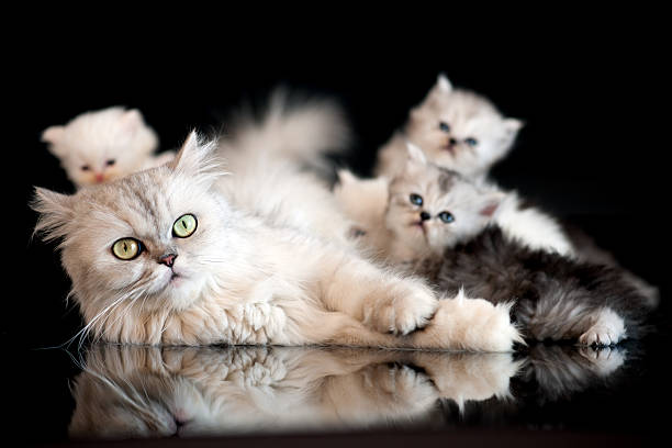 Cat family picture id165820334?b=1&k=6&m=165820334&s=612x612&w=0&h=mdya09bgc2v vltbrv35tcc1gacb5gv1rgzidwqelvk=