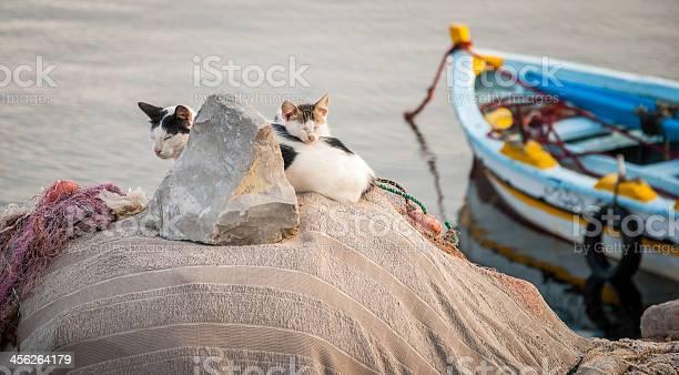 Cat family picture id456264179?b=1&k=6&m=456264179&s=612x612&h=n 0byvzzm6mi 7ou 1 4134snrqyjnxmxc0slijiloq=