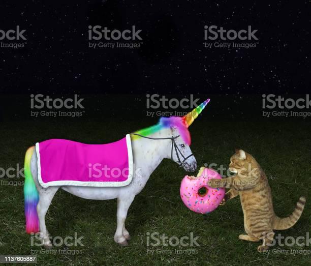 Cat feeding its unicorn with a donut picture id1137605887?b=1&k=6&m=1137605887&s=612x612&h=5gsy9deq s8usijvwosn62 zzqlrakkxceyovktu2am=
