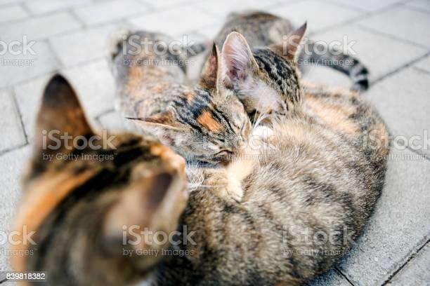 Cat feeding kittens picture id839818382?b=1&k=6&m=839818382&s=612x612&h=aspxu9xknf2uek0vu 7h8d83kjj ri7lw ziyym967e=