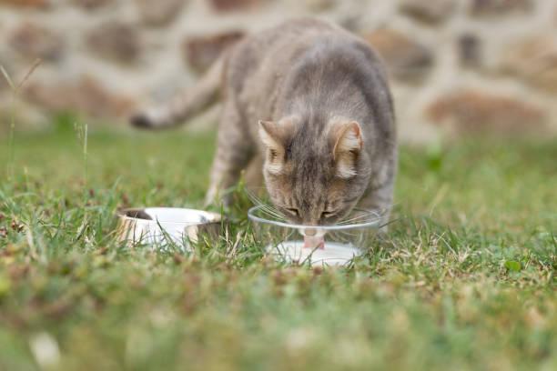 Cat feeding picture id905949400?b=1&k=6&m=905949400&s=612x612&w=0&h=0odfdqycswtnf3sv6fukmoed17x94clcvj1fljntdoe=