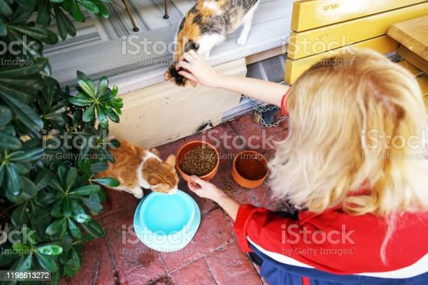Cat feeding woman picture id1198613272?b=1&k=6&m=1198613272&s=612x612&h=cqz1dhwc0pt7ltjqneqbndomnlmrlkn6fxknkybgovy=