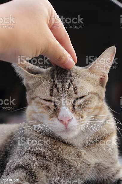 Cat feels good 2 picture id465452356?b=1&k=6&m=465452356&s=612x612&h=kyz8vqwaozlmajzro1vus0 3ujj3kbarngbdrm26ty0=