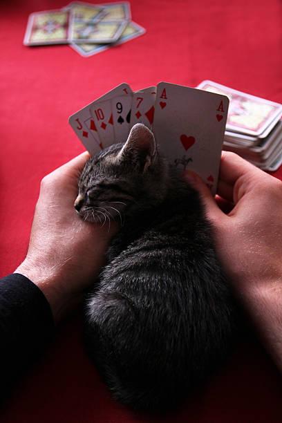 Cat fell asleep while playing poker picture id187857580?b=1&k=6&m=187857580&s=612x612&w=0&h=wju7yfgok8xpfgl8hrfstrf702kge205pfy92fegmos=