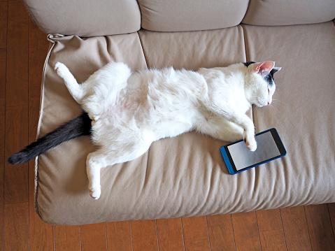 istock Cat Felll Asleep While Using Smartphone 851691912