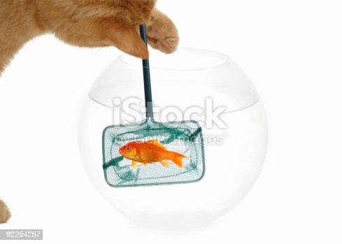 istock Cat fishing 92254257