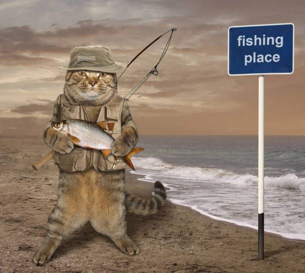 cat fishman 3 - fishman imagens e fotografias de stock