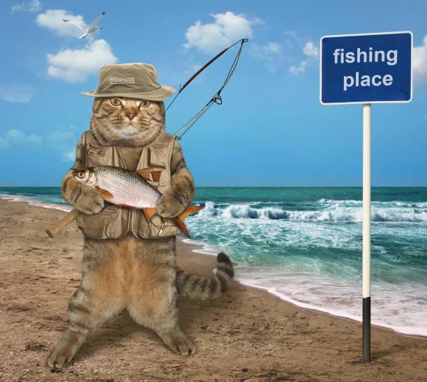 cat fishman with fish - fishman imagens e fotografias de stock