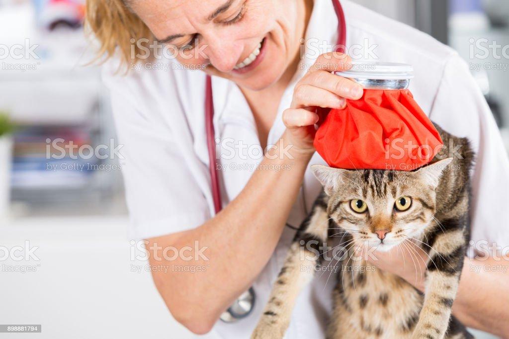 Cat flu stock photo