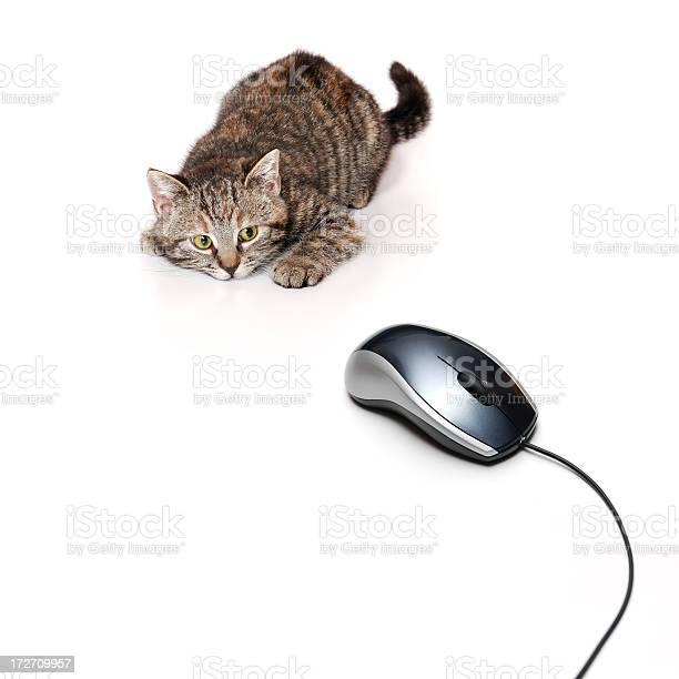 Cat focusing on a computer mouse picture id172709957?b=1&k=6&m=172709957&s=612x612&h=wmukgiqdnjpmx0tuujydzeme49vh2y04d2v0wyk6zr0=