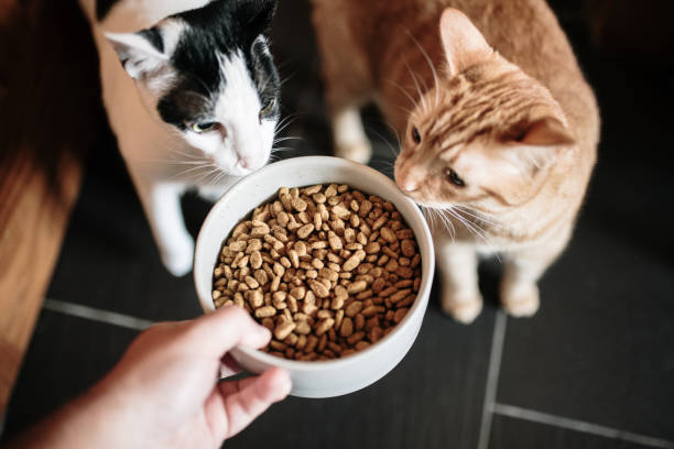 Cat food and two cats stock photo