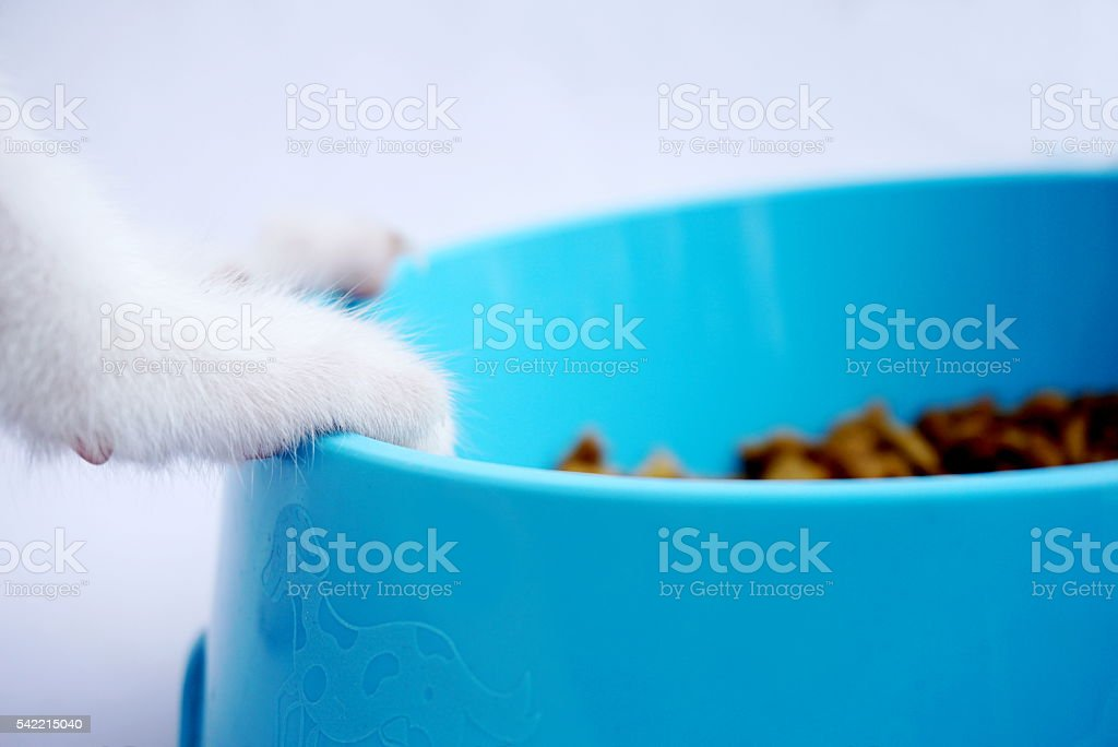 Cat foot and food in bowl isolated – Foto
