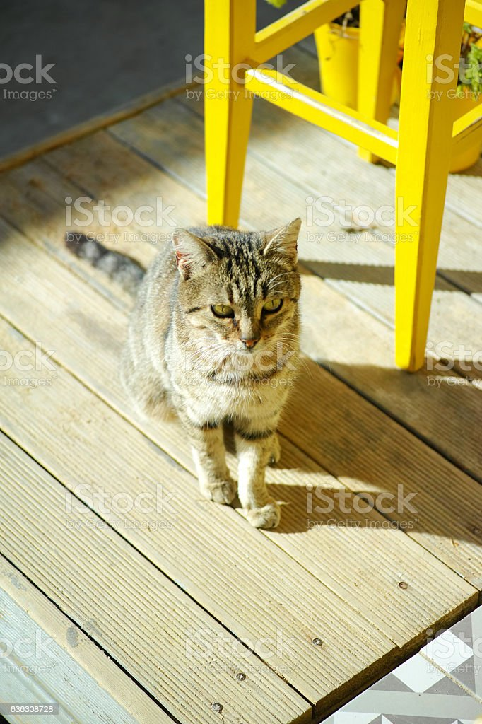 Cat From Above On A Wooden Floor With Yellow Chair stock photo