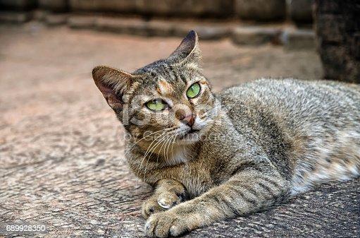 istock A cat from Angkor, Cambodia 689928350