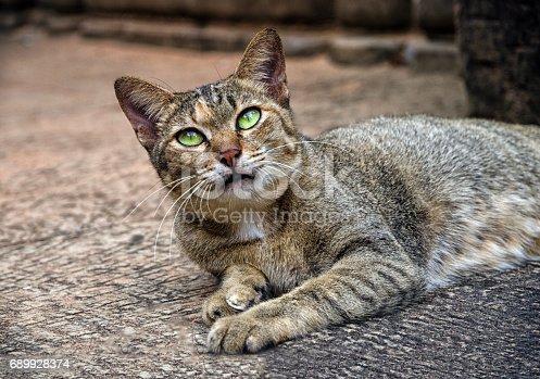 istock A cat from Angkor, Cambodia 689928374