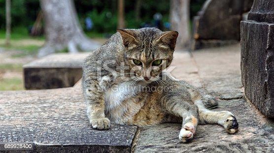 istock A cat from Angkor, Cambodia 689928400