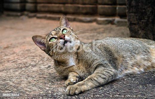 istock A cat from Angkor, Cambodia 689928454