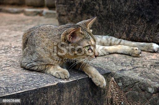 istock A cat from Angkor, Cambodia 689928486