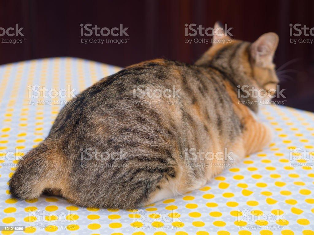 Gato de vista traseira foto royalty-free
